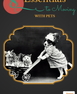 8 Essentials To Moving With Pets